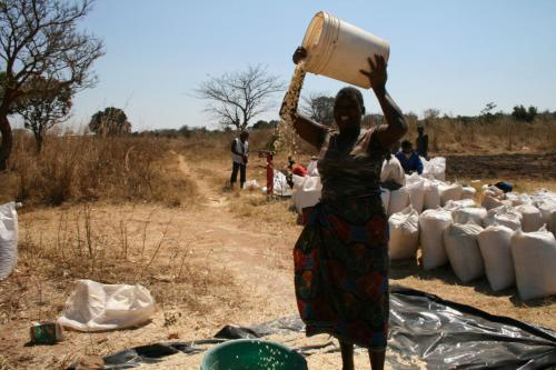 A farmer cleaning her maize at Mapepo depot in Kafue